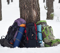Three backpacks near pine tree on snow at winter forest