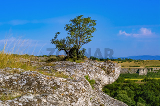 Tree on the crag