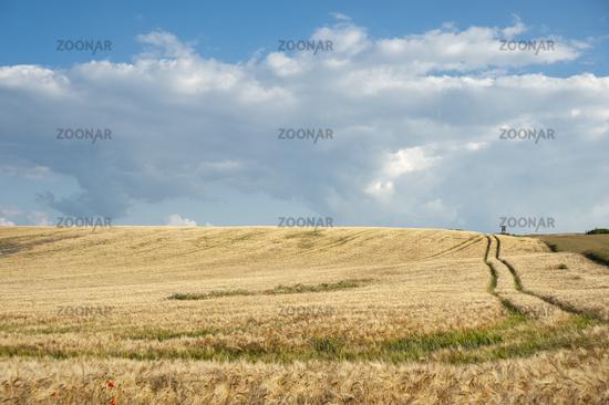 Landschaft mit Getreidefeld in Baabe-Moritzdorf