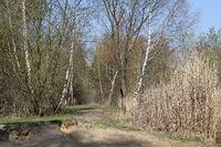 Uferweg am Biotopsee an den Arkenbergen in Berlin