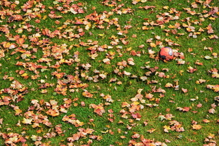 Herbstblätter mit Ball