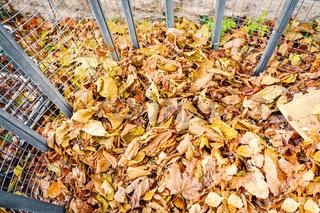 autumn foliage batch