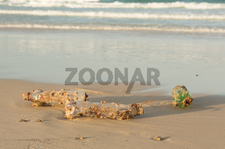 Plastic products clog nature more and more. Plastic bottle covered in sea barnacles and sponges (foulers) and cast ashore on the beach, marine pollution. Nature is fighting with the garbage