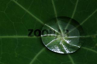Wassertropfen auf Kapuzinerkressenblatt