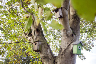 various birdhouses hanging on green tree in nature, closeup