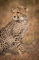 Close-up of cheetah cub sitting in grassland