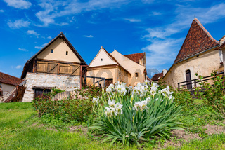 Spring view of the Rasnov citadel inner countryard, in Brasov county (Romania), with blooming white irises in the foreground and beautiful medieval stone houses in the background