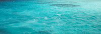 White Island Africa Egypt Snorkeling Boat Trip water background.