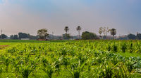 Green meadow and blue sky with few clouds at an Egyptian village