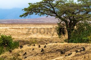 Gruppe Paviane unter einem Baum
