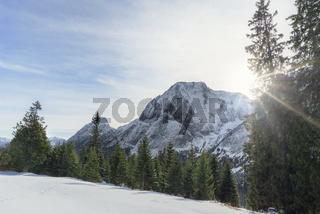 Sunshine over snowy mountains and fir trees