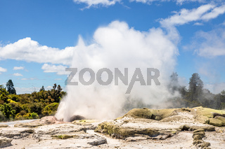 Geyser in New Zealand Rotorua