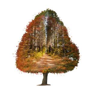 Autumn tree Double Exposure effect