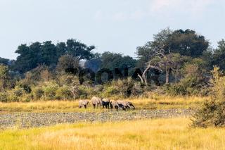 African elephant, Namibia, Africa safari wildlife