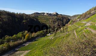 Blick auf die Weinfelder im Ahrtal vom Rotweinwanderweg