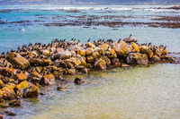 Boulders and algae on Atlantic