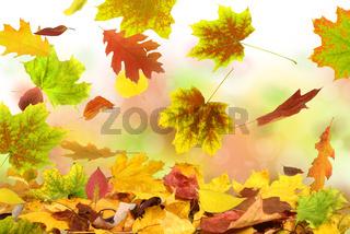 Herbst 52