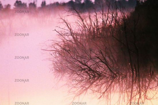 Fog on a deep swamp with a dead Bush