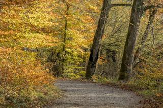 Herbstwald am Mindelsee, Radolfzell-Möggingen am Bodensee