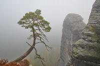 Elbsandsteingebirge im Herbst an der Bastei mit Nebel
