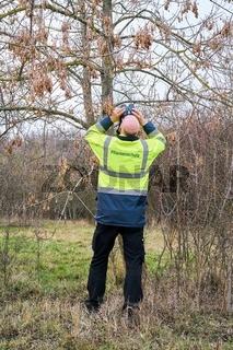 Experte während der Untersuchung von Bäumen auf einen möglichen Schädlingsbefall