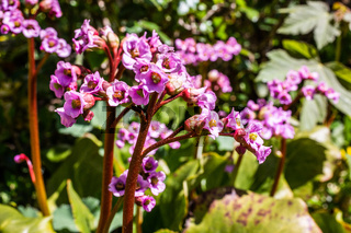 Wildblumen mit violetten Blüten