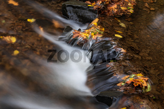 River in the woods in autumn